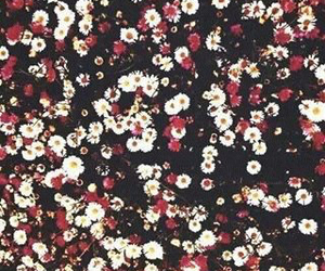 flower, wallpaper, and cute image