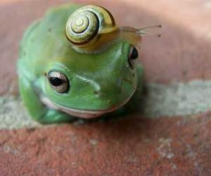 animals, snail, and frog image
