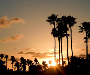 sunset and palm trees image