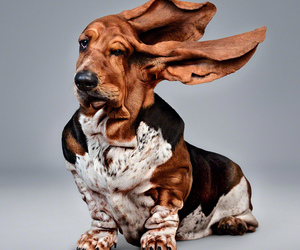 dog, cute, and wind image
