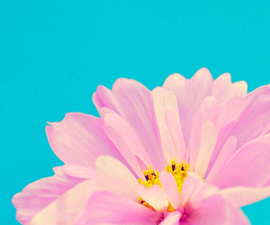 blossom, blue, and classic image