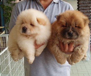 fluffy, cute, and puppy image