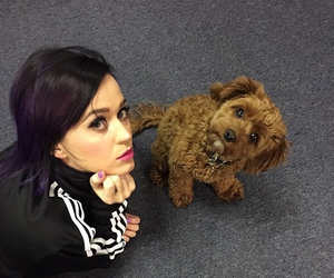 katy perry, dog, and katy image