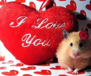 love and hamster image