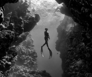 diving, fish, and ocean image