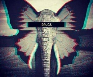 drugs, elephant, and butterfly image