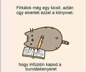 magyar, funny, and cat image
