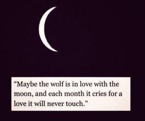wolf, love, and moon image