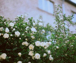 flower, vintage, and cute image