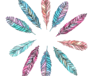 feather and colorful image