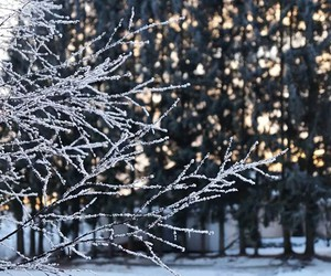 arctic, winter, and finland image