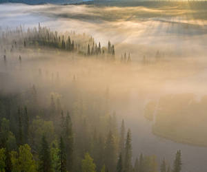 finland, fog, and forest image