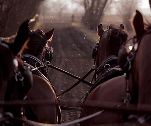 horse, horses, and equestrian on wheels image