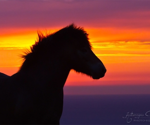 horse, riding, and pony image