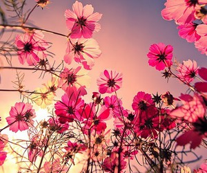 floers and pink image