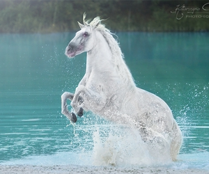 horse, pony, and riding image