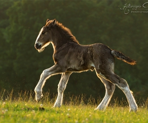 horse, Poland, and pony image