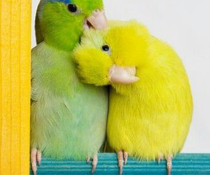 birds and cute image