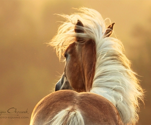 horse, nature, and pony image