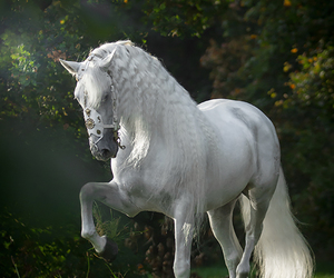 horse and cute image