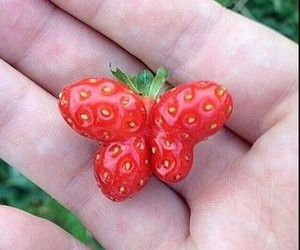 strawberry, butterfly, and fruit image