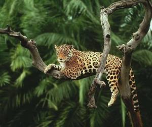 animal, nature, and leopard image