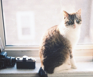 cat, cute, and indie image
