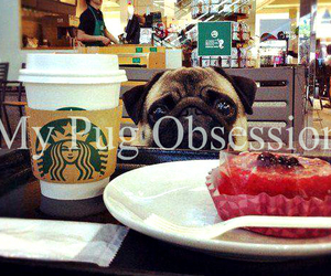 obsession, pug, and true story image
