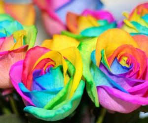 rose, flowers, and rainbow image