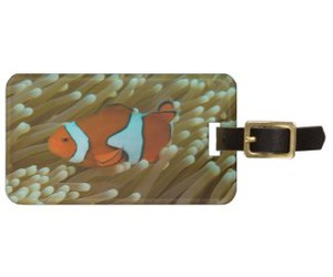 reef, clownfish, and greatbarrierreef image