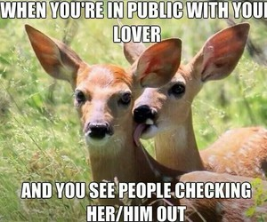 funny, love, and deer image