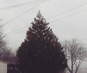 cold, tree, and pino image