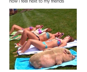 friends, funny, and pig image