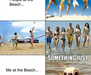 funny, beach, and dog image