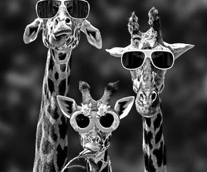 giraffe, animal, and funny image