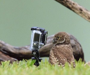 camera and owl image