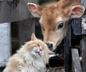 cat, animal, and friends image
