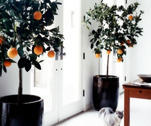 interior, plants, and tree image