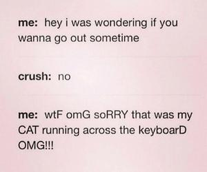 crush, funny, and cat image