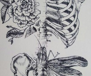 flowers, pink, and skeleton image