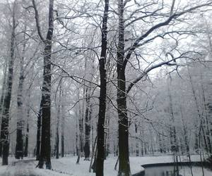 black&white, snow, and winter image