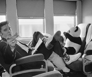 black and white, Elvis Presley, and panda image