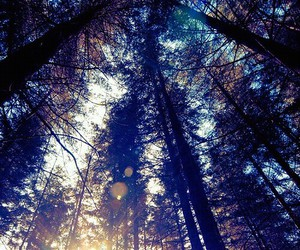 beatiful, forest, and sun image