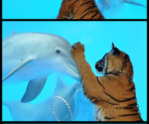 dolphins and tiger image