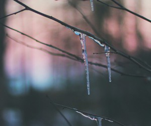 ice, winter, and cold image