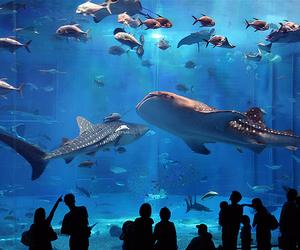 aquarium, fish, and blue image