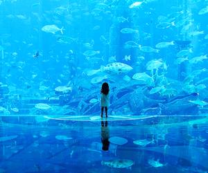 fish, aquarium, and blue image