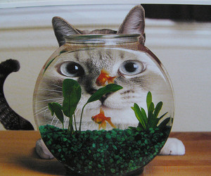 cat, fish, and fish tank image