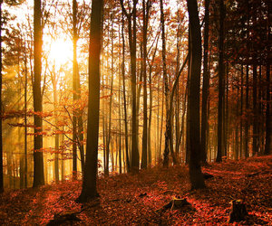 beautiful, beauty, and forest image