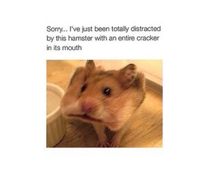 hamster, cracker, and funny image